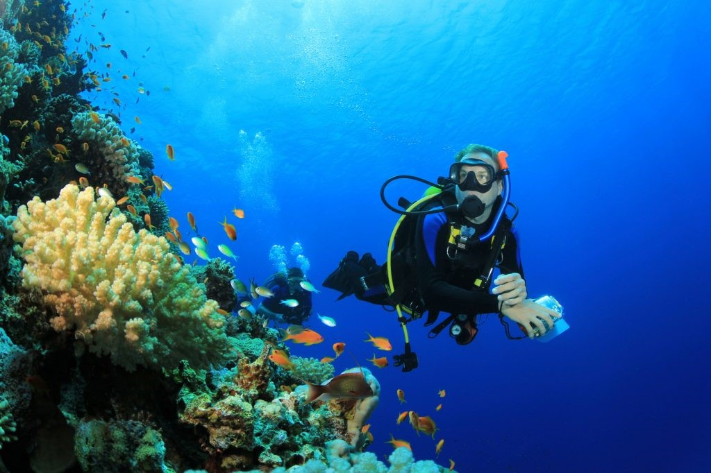 denizaltı zenginliklerini gözlemleyen dalgıç
