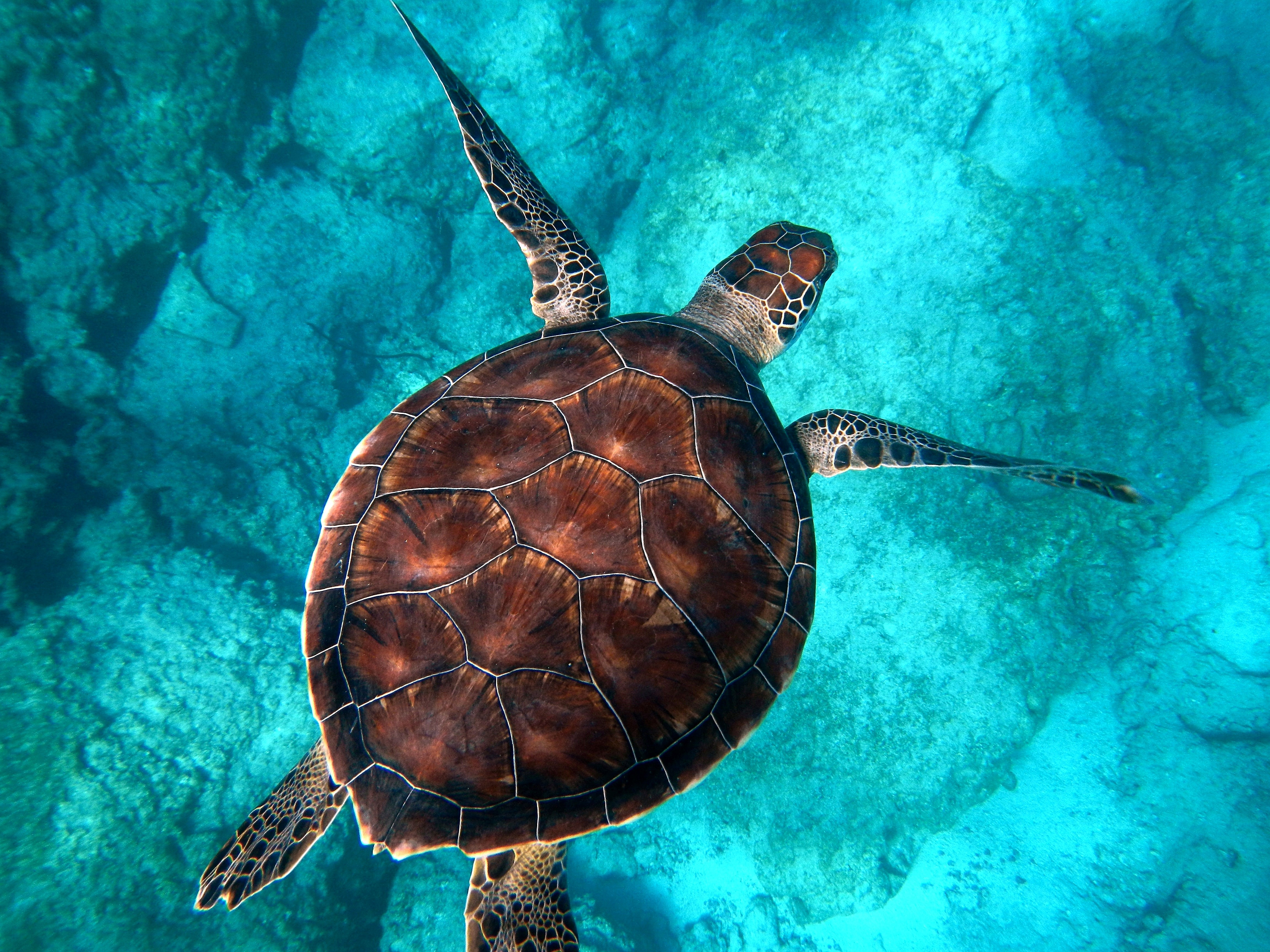 kaputaj plajında deniz kaplumbağası